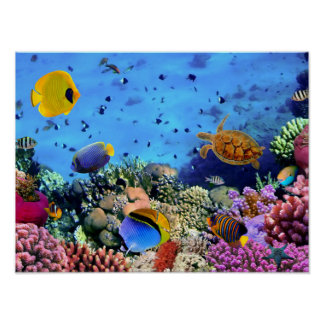 Critters coloridos del arrecife de coral póster