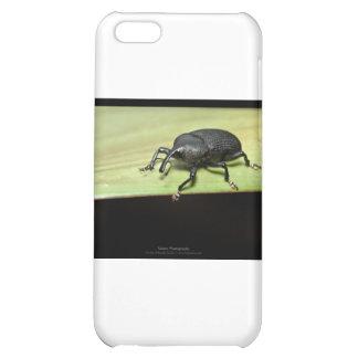 Critters del jardín - escarabajo 001