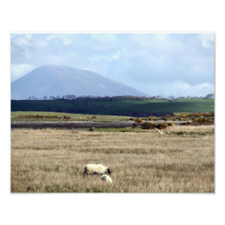 Croagh Patrick watches over the flock Photographic Print