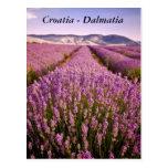 Croatia - Dalmatia Post Card