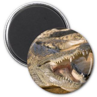 crocodile 2 inch round magnet