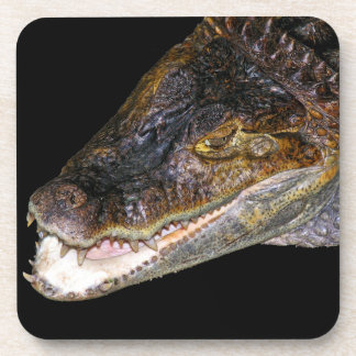 Crocodile / Alligator Head, Black Back Coaster