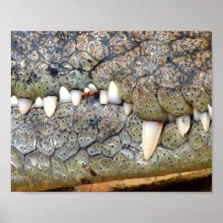 Crocodile alligator tooth poster