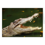 Crocodile and Caiman from Junglewalk.com Greeting Cards
