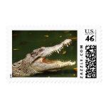 Crocodile and Caiman from Junglewalk.com Postage Stamp