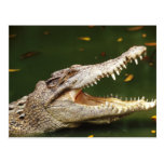 Crocodile and Caiman from Junglewalk.com Post Cards