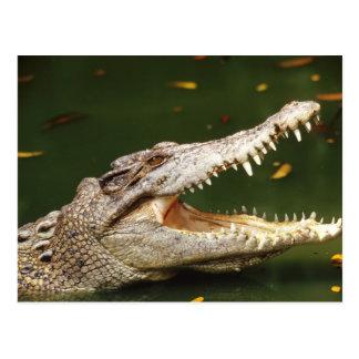 Crocodile and Caiman from Junglewalk.com Postcard