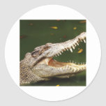 Crocodile and Caiman from Junglewalk.com Round Sticker