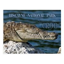 Crocodile, Biscayne National Park, Florida Postcard