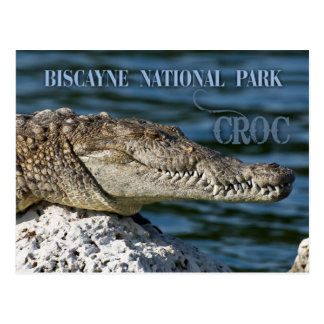 Crocodile, Biscayne National Park, Florida Postcard