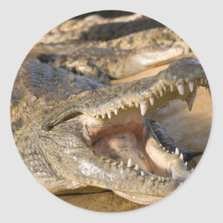 crocodile classic round sticker