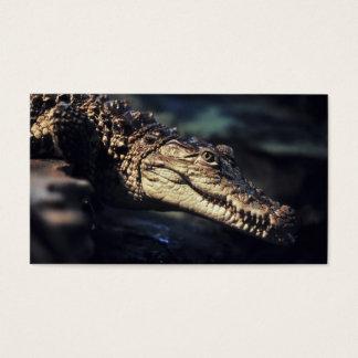 Crocodile close-up business card
