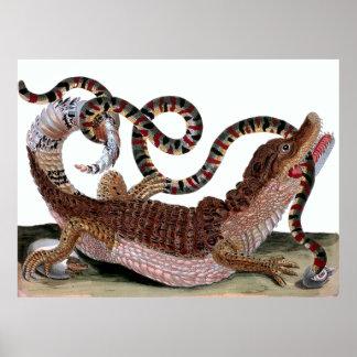 Crocodile Eating Snake Poster