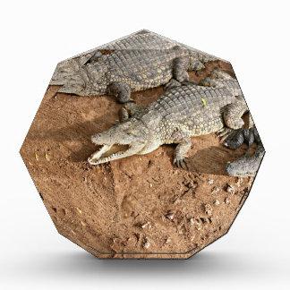 Crocodile expectation acrylic award