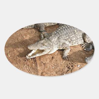 Crocodile expectation oval sticker