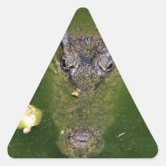 Crocodile green swamp triangle sticker