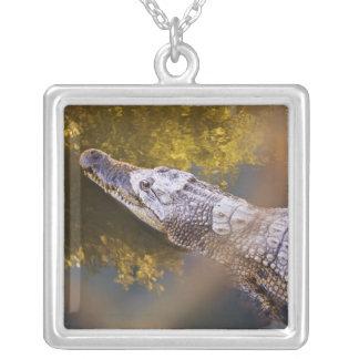 Crocodile in a Breeding Farm Necklace