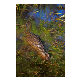 Crocodile in Water Poster