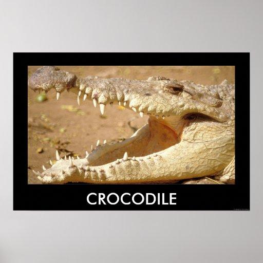 crocodile Jaws from JungleWalk.com Poster