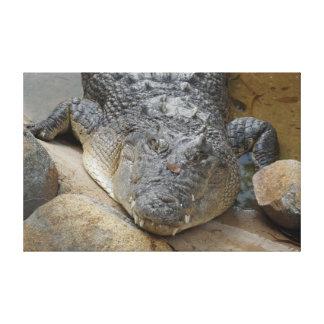 CROCODILE NORTH QUEENSLAND AUSTRALIA CANVAS PRINT