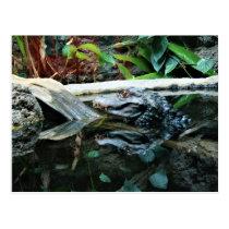 crocodile reflection shot postcard