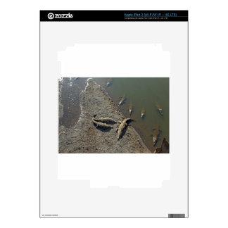 crocodile river iPad 3 decal