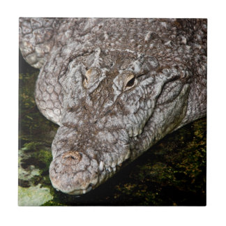 Crocodile Tile