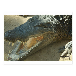 Crocodile with broken tooth.jpg postcard