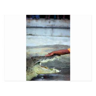 Crocodile wrangling postcard