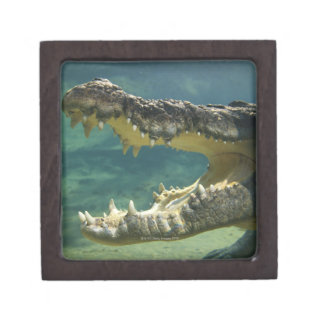 Crocodiles open mouth keepsake box
