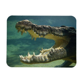 Crocodiles open mouth rectangular photo magnet