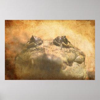 Crocodylus Moreletii Close up Posters
