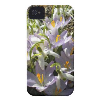 Crocus and Snowdrops iPhone 4 case