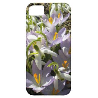 Crocus and Snowdrops iPhone 5 case