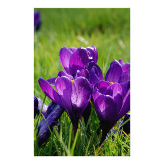 Crocus blooms stationery