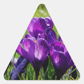 Crocus blooms triangle sticker