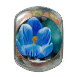 Crocus Colors Glass Jars