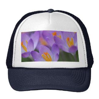 Crocus fine gentle blossoms mesh hats