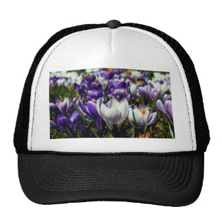 Crocus Flower Hats