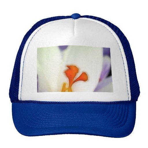 Crocus Flower in Early Spring Hat
