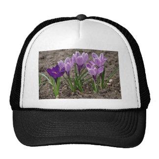Crocus flowers trucker hat