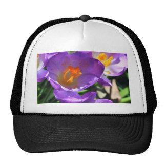 Crocus flowers.jpg mesh hats