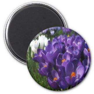Crocus Flowers Painterly 2 Inch Round Magnet