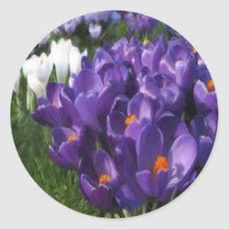Crocus Flowers Painterly Classic Round Sticker