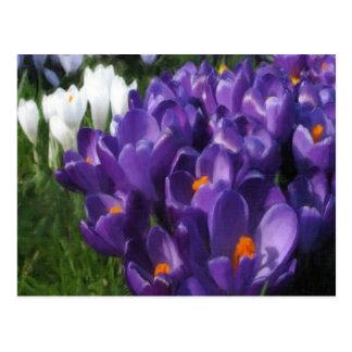 Crocus Flowers Painterly Postcard