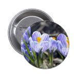 Crocus Flowers Pins