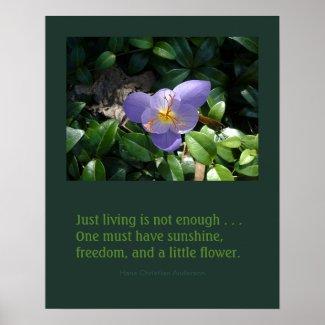 Crocus garden poster