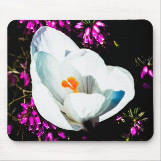 Crocus In Flower Bed Mouse Pads