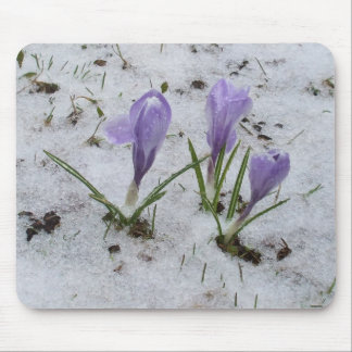 Crocus in Snow Mouse Pad