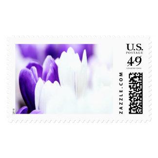 Crocus Large Postage Stamps